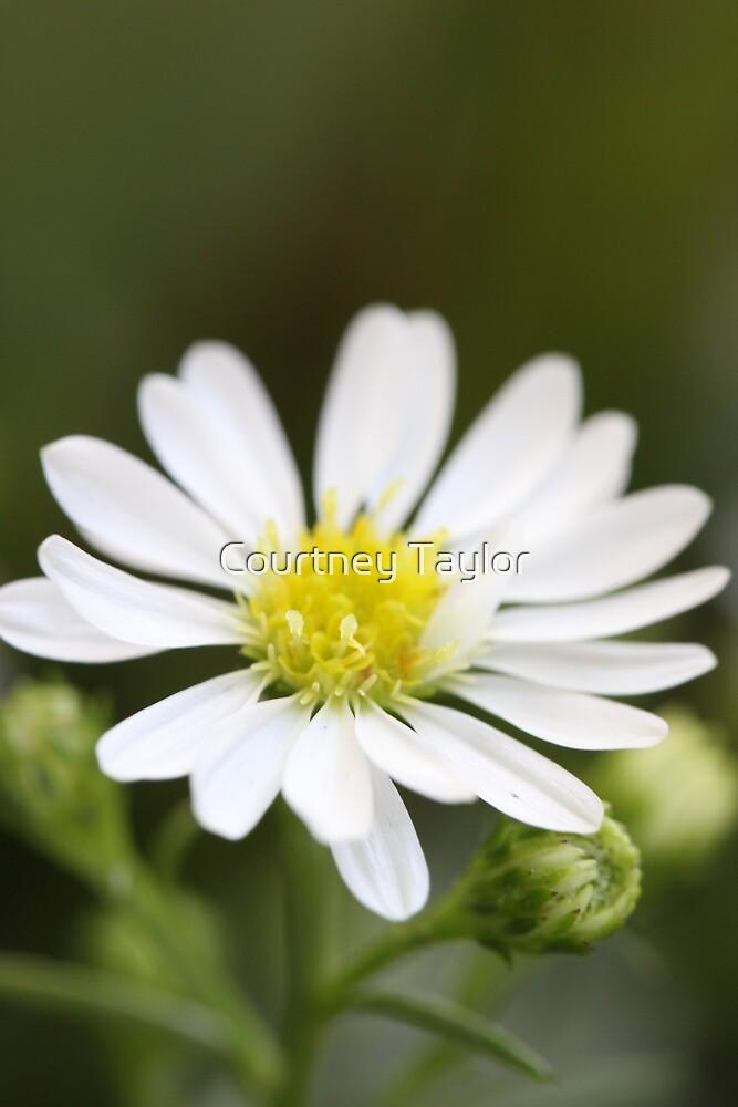 single white flower by Yentuoc