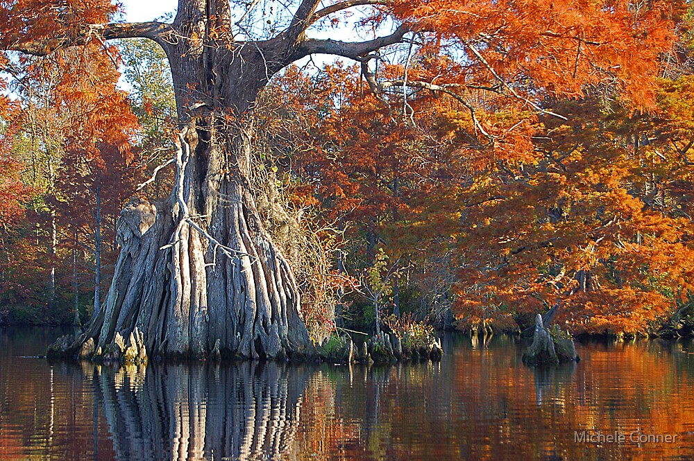 Remarkable Tree - Lake Drummond by Michele Conner