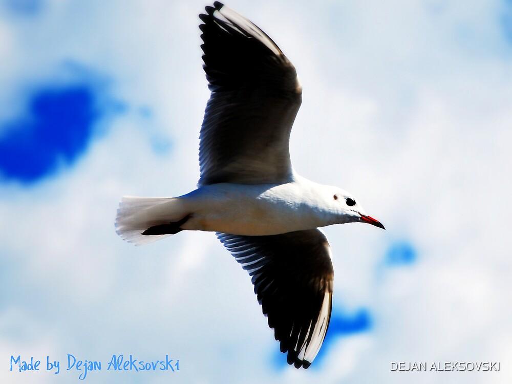 Flight by DEJAN ALEKSOVSKI