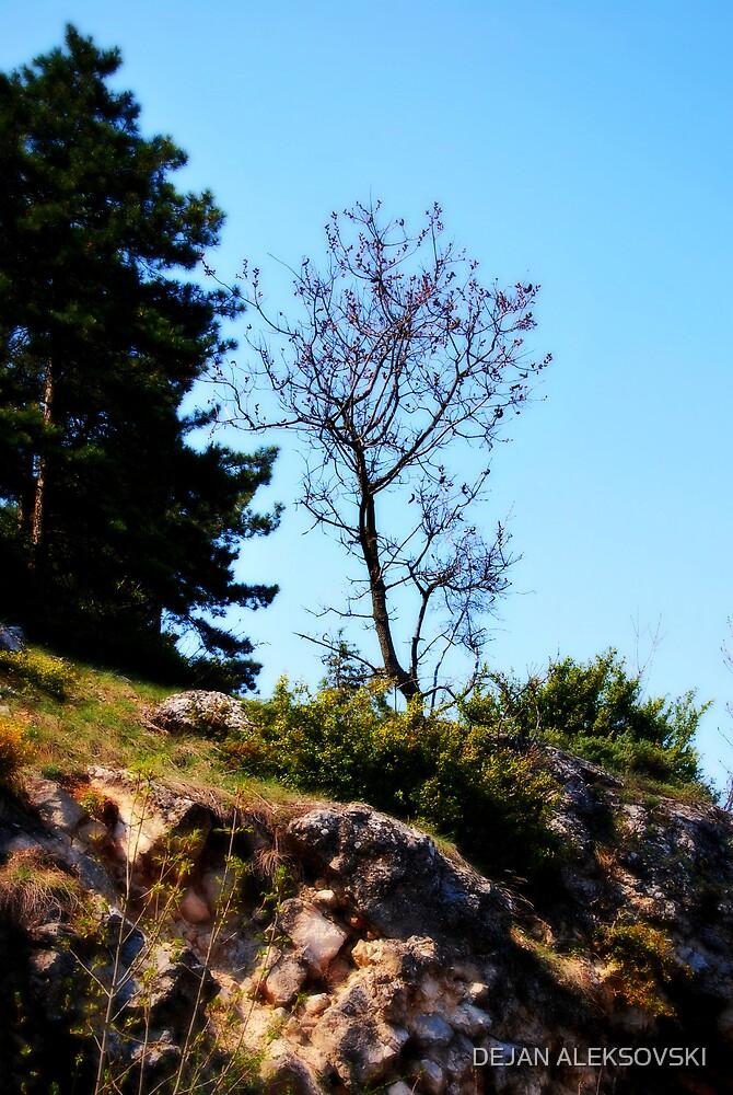 One tree by DEJAN ALEKSOVSKI