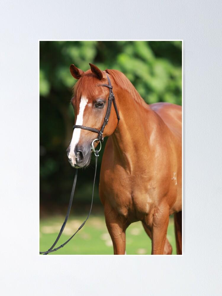 Quot Bright Chestnut Horse Portrait Quot Poster By Luxie Redbubble