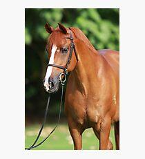 Bright Chestnut Horse Portrait Photographic Print