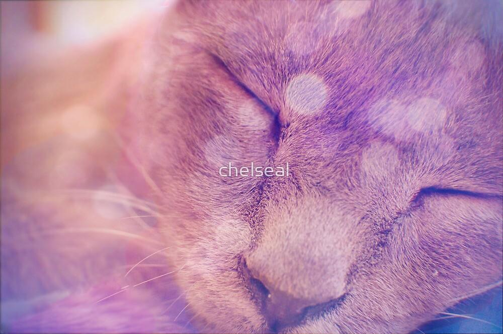 Meowww by chelseal