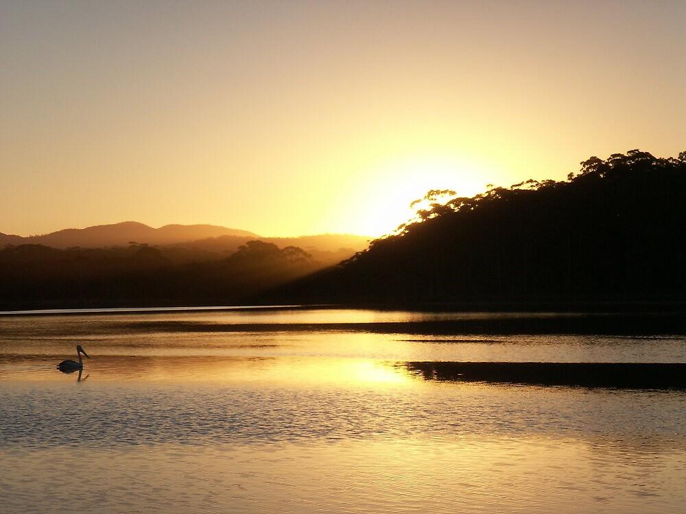 Pelican Sunset 2 by Vonnstar