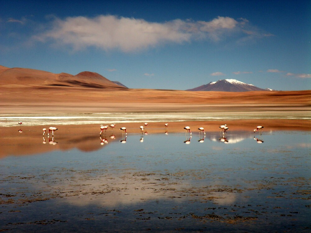 Flamingo Reflections by Vonnstar