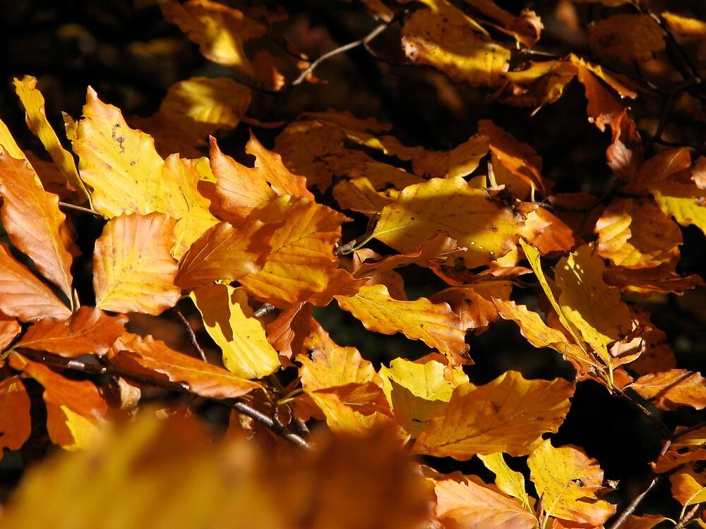 Golden Autumn by Christian Langenegger