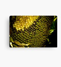 Sunflower Seeds Canvas Print