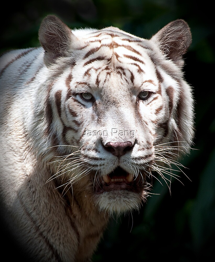 The White Tiger by Jason Pang, FAPS FADPA