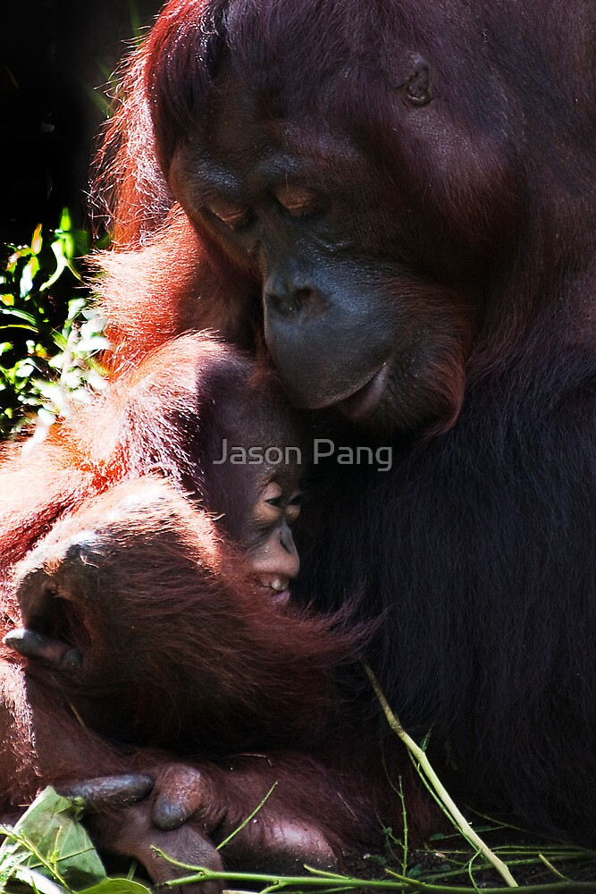 Safe in Mother's Arm by Jason Pang, FAPS FADPA