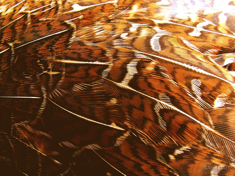 Tail Feather Blur/c by NAGILLAH