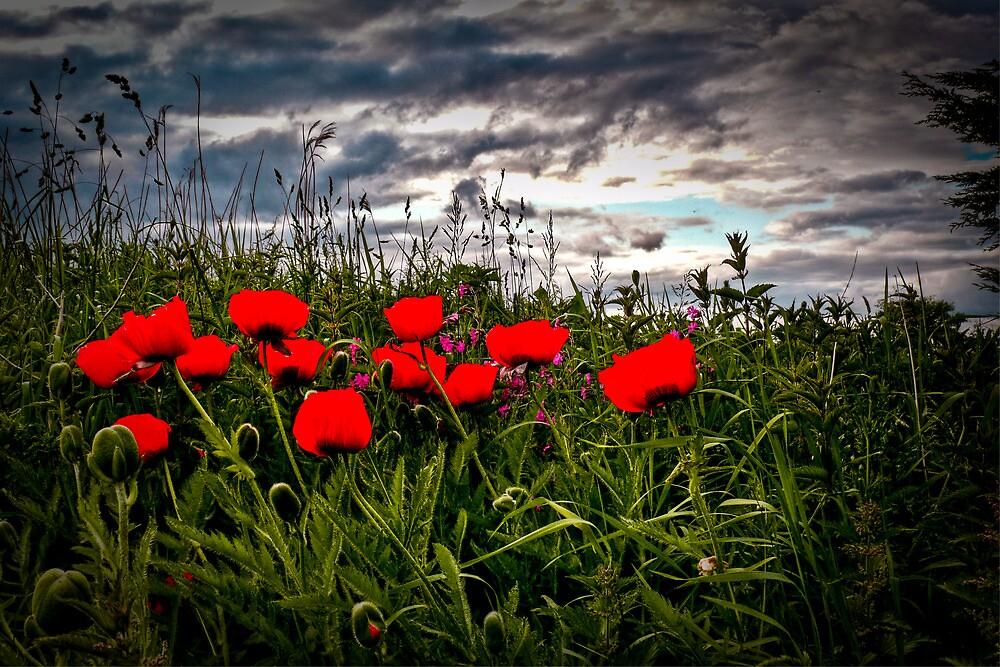 Poppies in Blackshaw by spikearnott