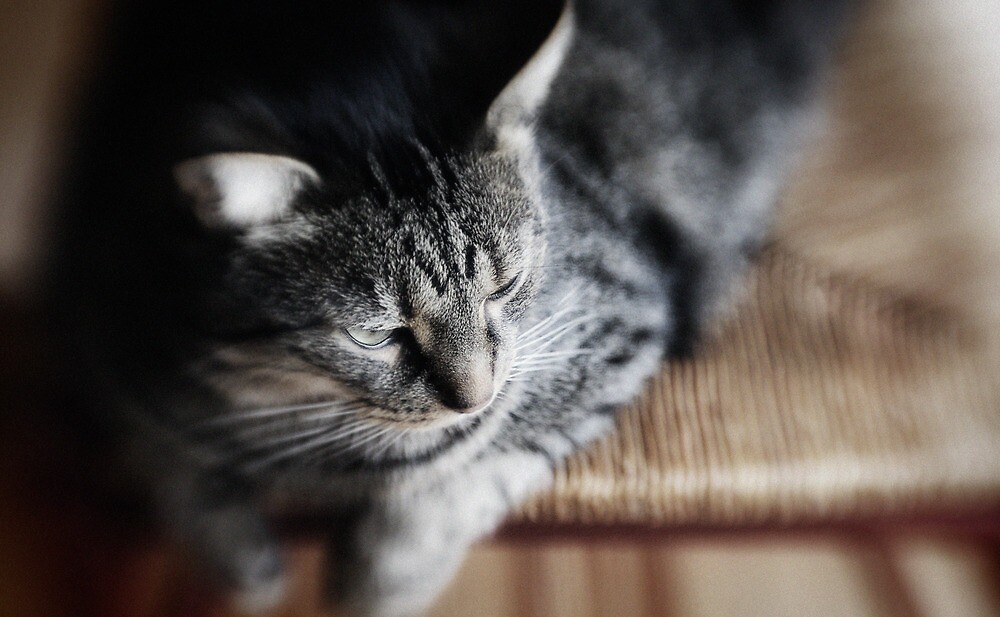 My cat by Steve Barnes