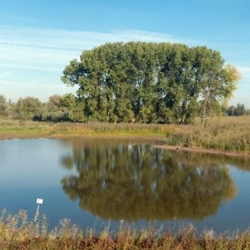 Tiengeboden Gelderland The Netherlands   Panorama view over a lake Oude Waal. Trees reflected in a lake. by stuwdamdorp