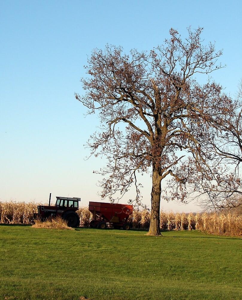 Harvest Time by angelandspot