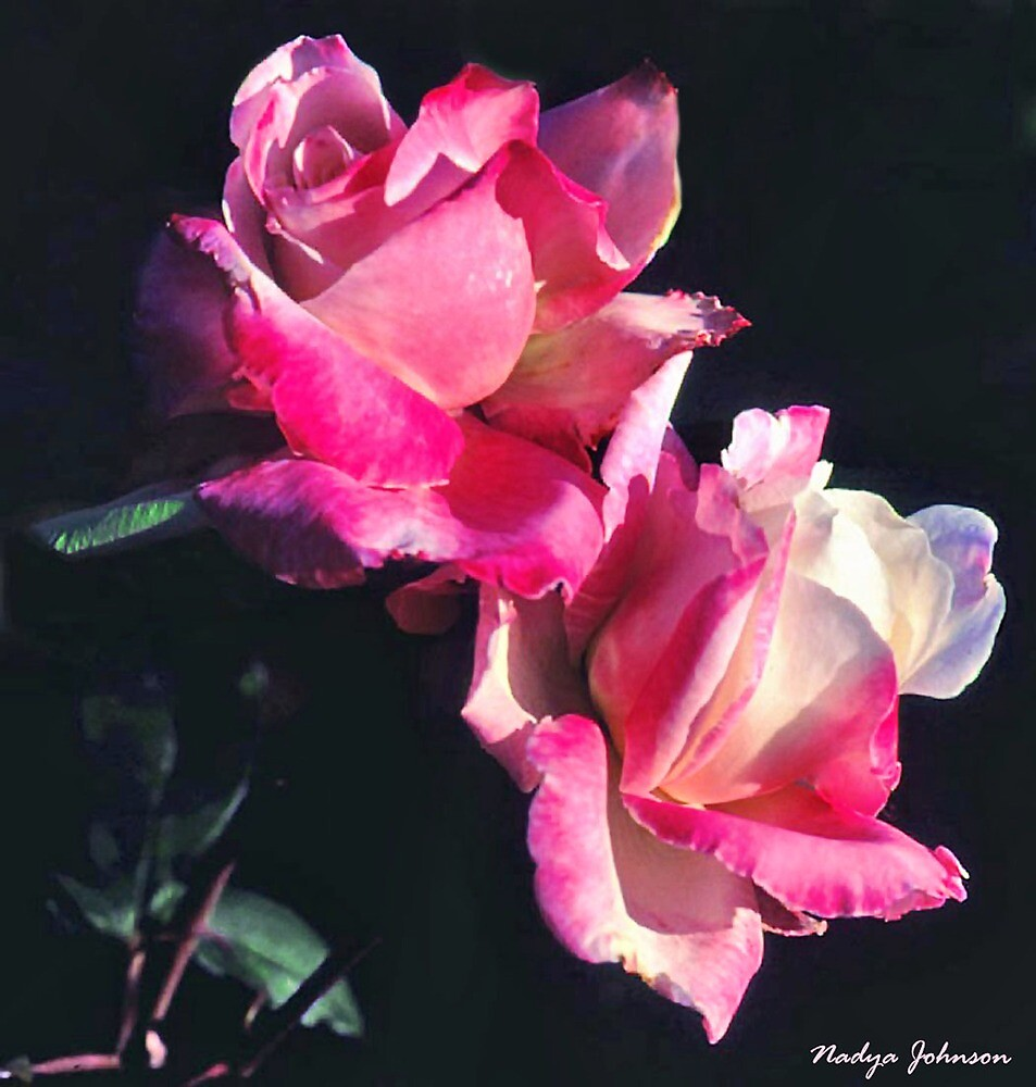 Pretty in Pink by Nadya Johnson