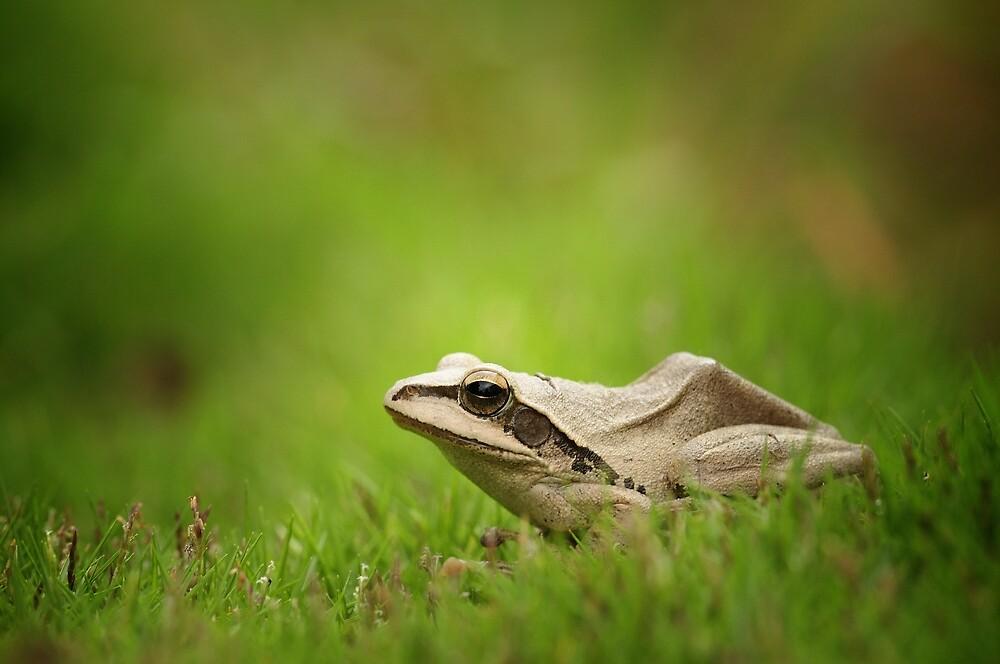 Frog by pvraghav