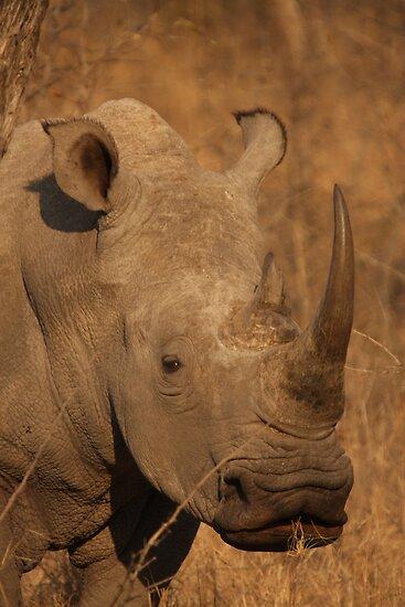 White Rhinoceros by Jo McGowan