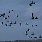The Birds 01 by Sharon Perrett