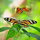 Flutterflies by joemc