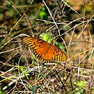 Flame Colored Insect  by RollZLX