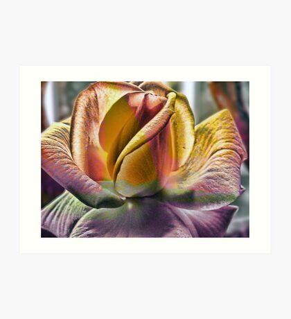 Rose in Texture Art Print
