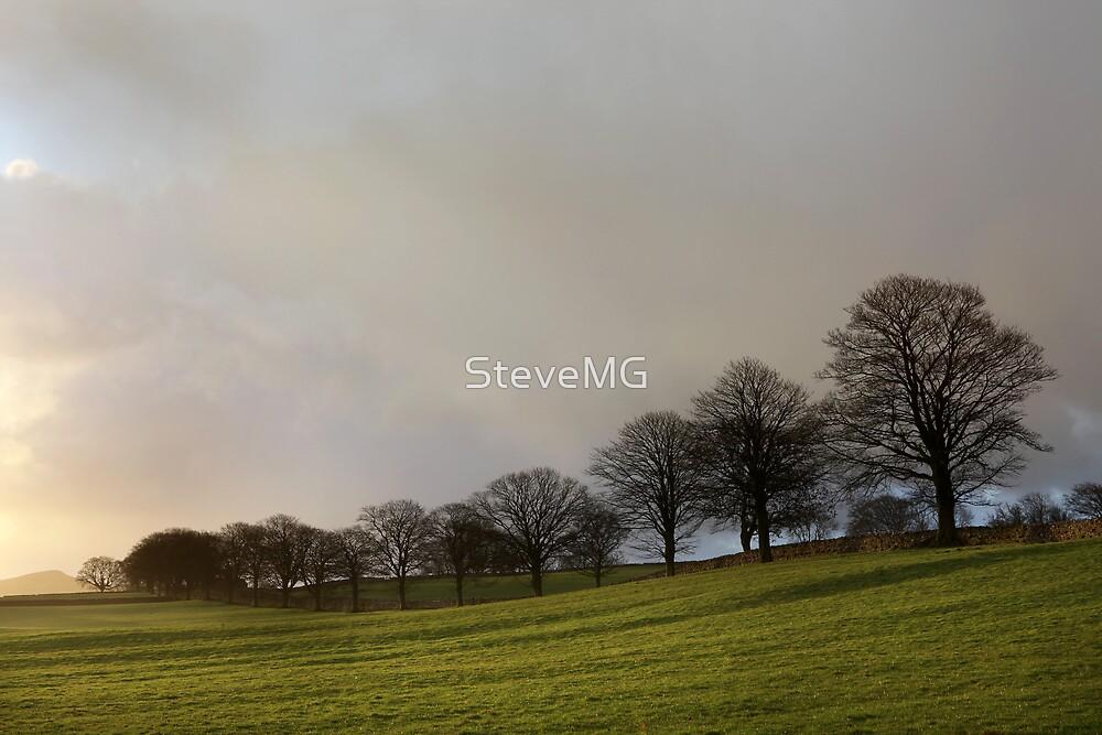 Airton Tree Line by SteveMG