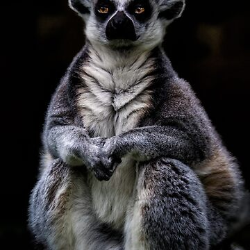 Portrait Of A Ring Tailed Lemur by ChrisLord