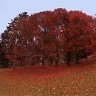 Red Fall by Stefan Trenker