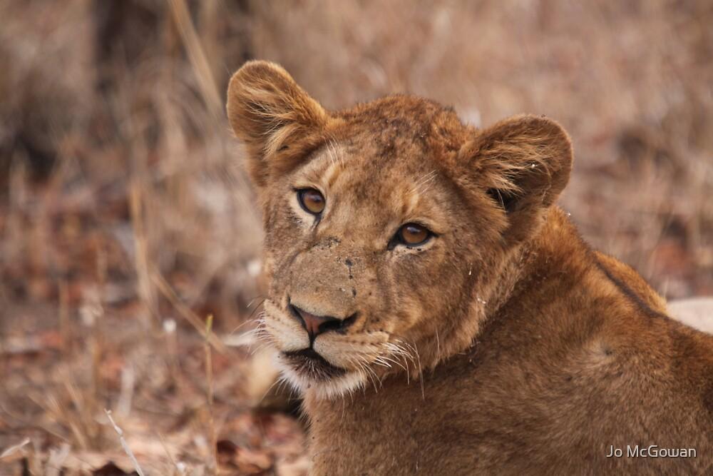 Lion stare by Jo McGowan