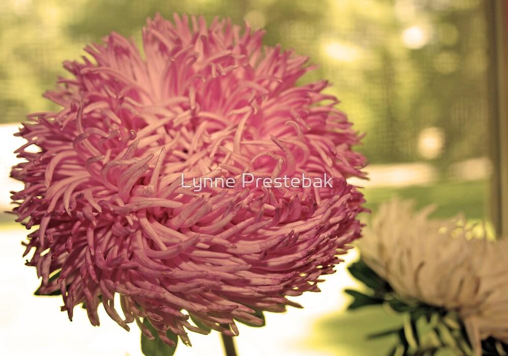pink flower by Lynne Prestebak
