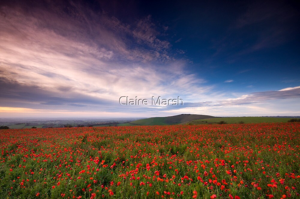 Carpet of Red by Claire Hutton
