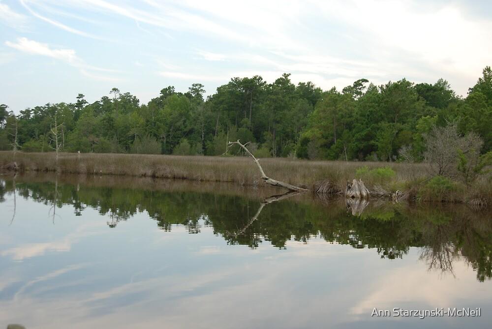 Mirrored landscape by Ann Starzynski-McNeil