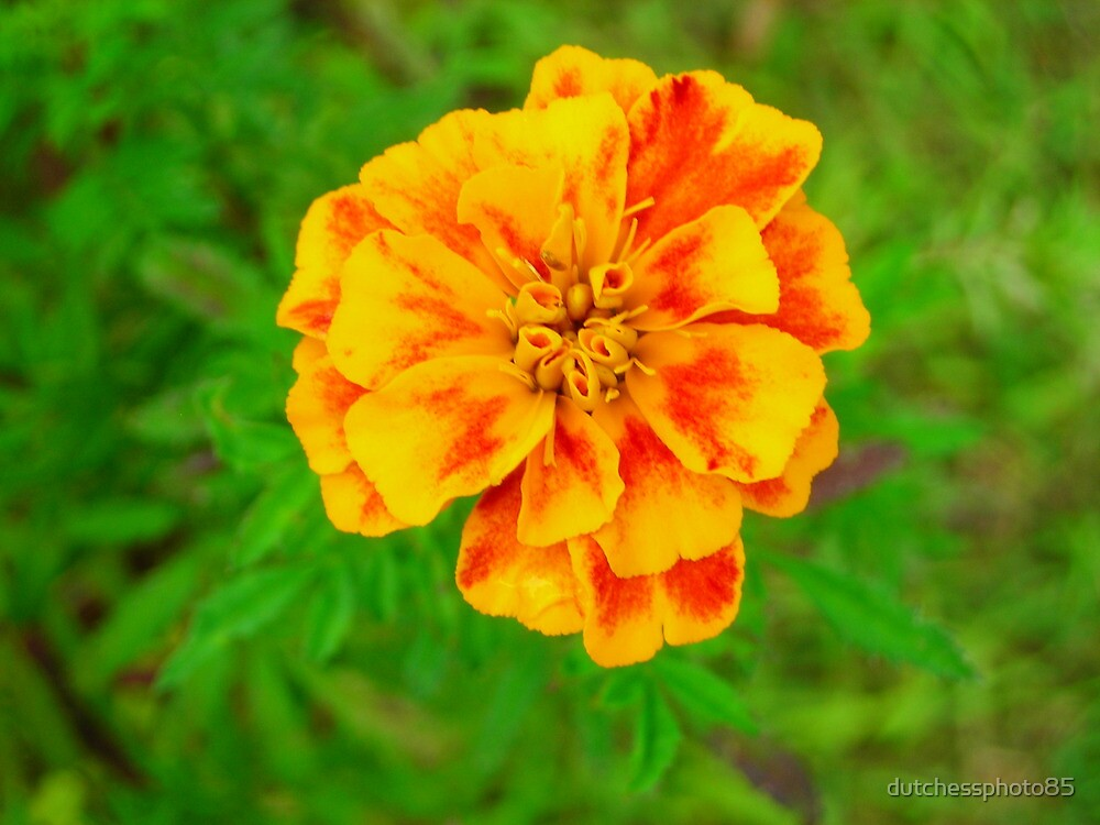 Yellow and Orange Swirl by dutchessphoto85