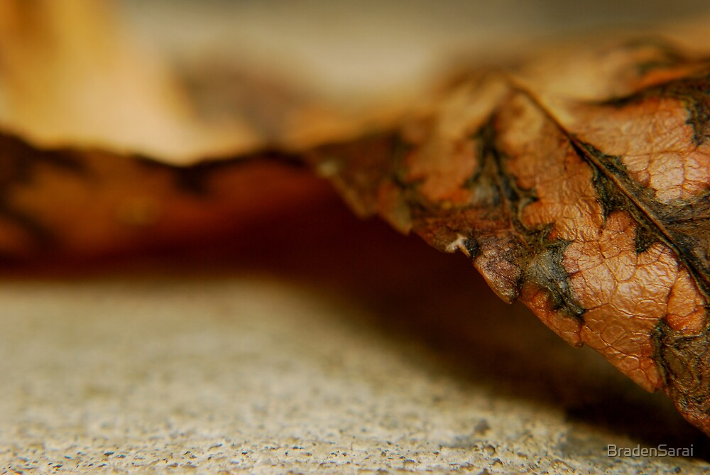 Fall is Here by BradenSarai