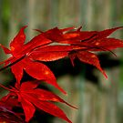 Red Maple, Green Bamboo by Greg German