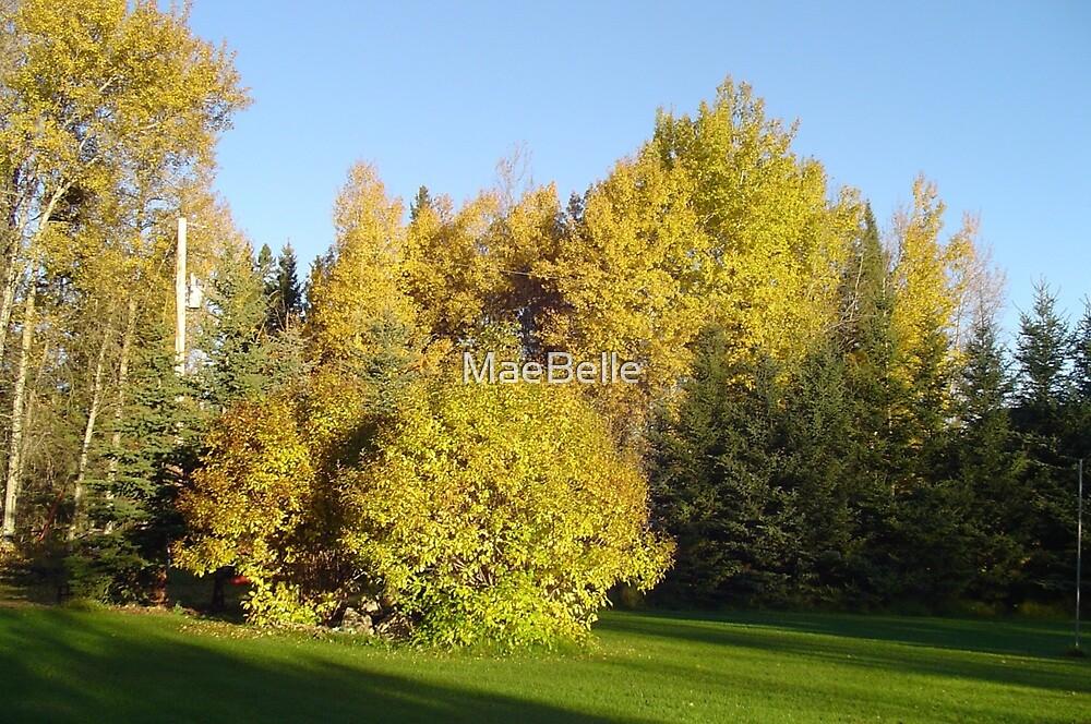 Autumn's Golden Splendor by MaeBelle