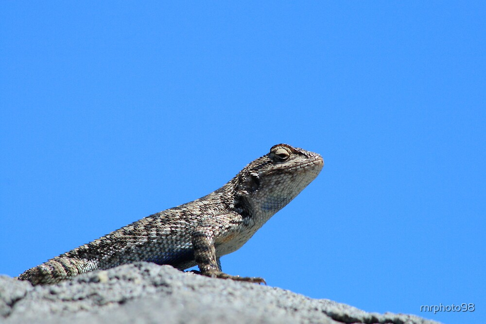Lizard King by rnrphoto98