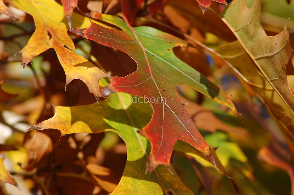 multi color leaves by dcborn