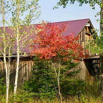 Barn with a purple roof by Shulie1
