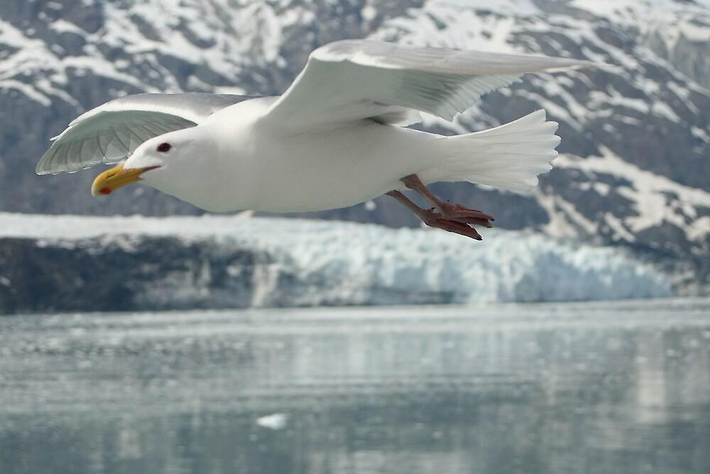 Flying High by DianaC