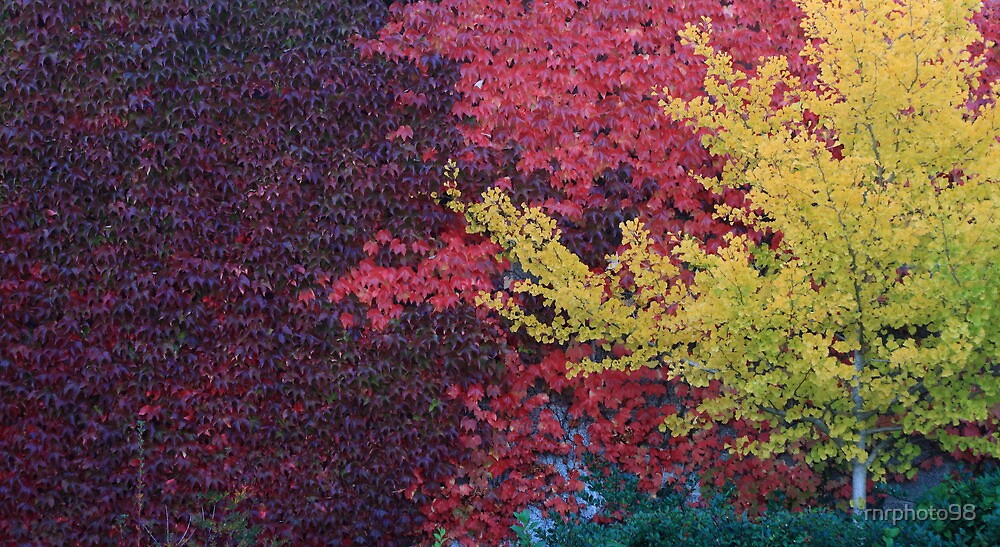 Fall colors on a wall by rnrphoto98