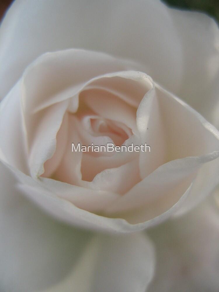 Fleshy Pink Rose by MarianBendeth