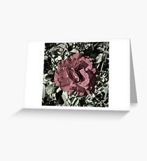 Winter Park Master of Roses Greeting Card