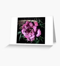 Winter Park Baby Pink Rose Greeting Card