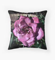 Winter Park Baby Pink Rose Throw Pillow