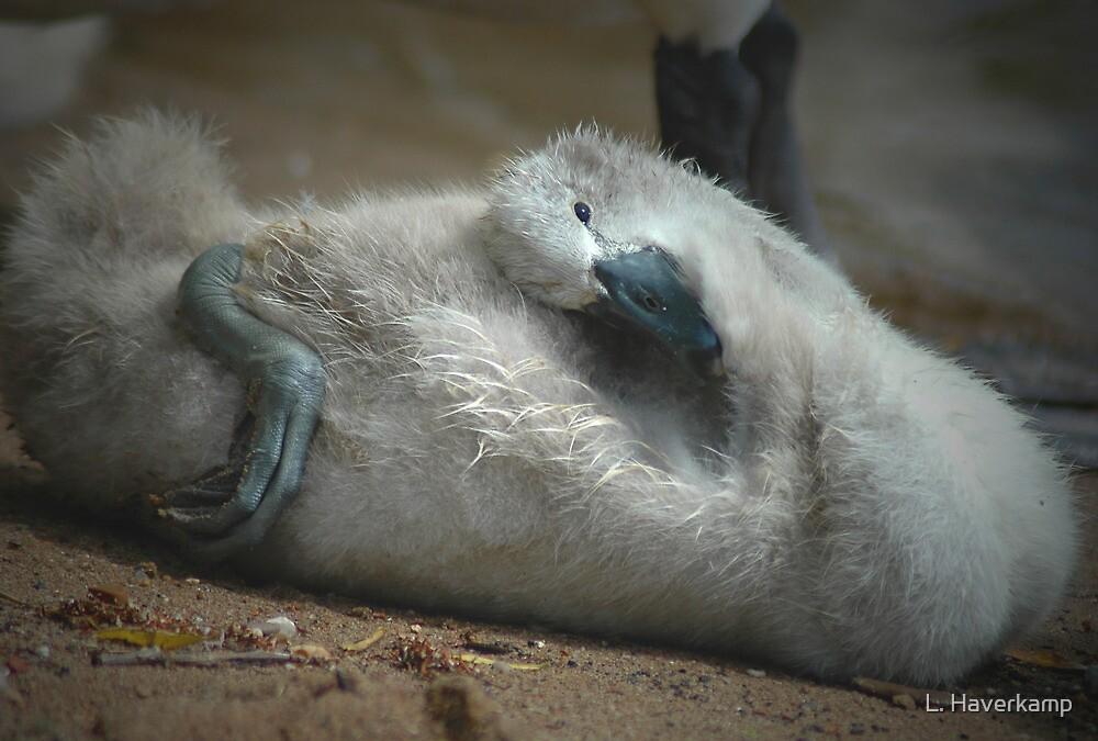 I Feel Sleepy -Baby Cygnet by L. Haverkamp