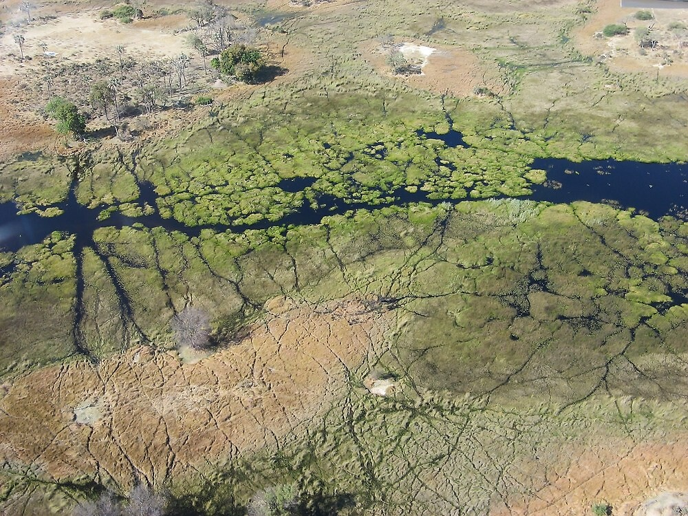 Okavango Delta, Botswana by DianaC