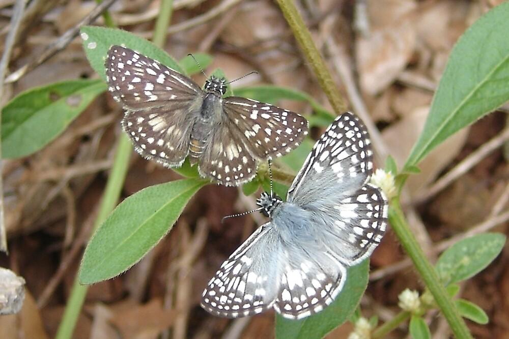 A couple of butterflies.  by AluisioRibeiro