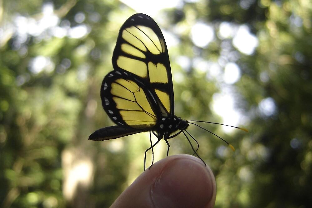 Butterfly by AluisioRibeiro