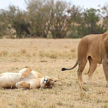 Domestic Bliss. Lions After Copulation, Maasai Mara, Kenya  by Carole-Anne